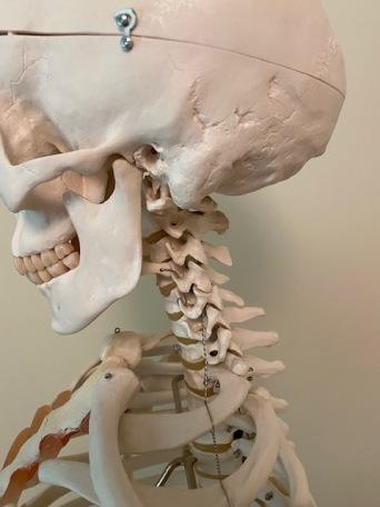 cervical-spine